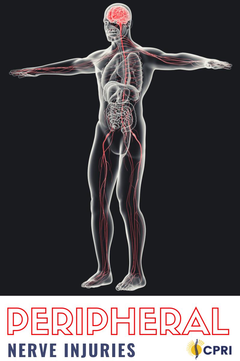 peripheral-nerves
